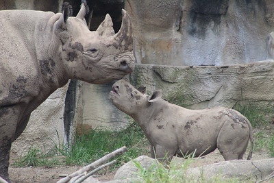 Cincinnati Zoo - 18 Sept. '17