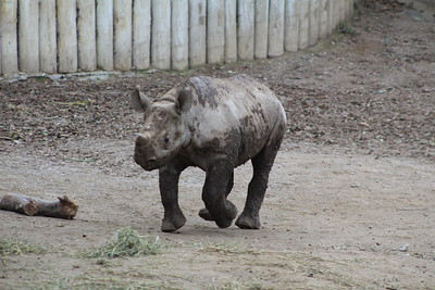 Cincinnati Zoo - 19 Dec. '17