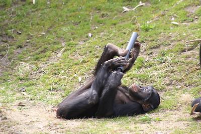Cincinnati Zoo - 22 Apr. '18
