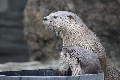 Cincinnati Zoo - 30 Mar. '18