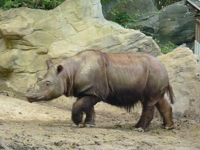 Cincinnati Zoo - 7 Sept. '15