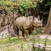 Mud Coated Rhino<br /> Cincinnati Zoo