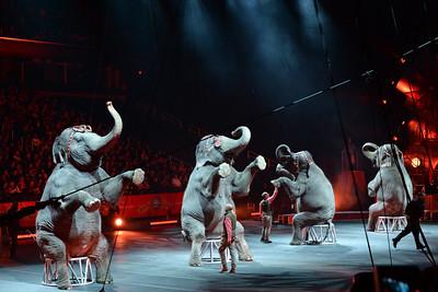 Elephants 05