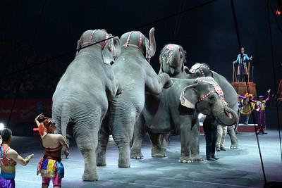 Elephants 06