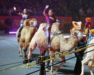 Camels 02