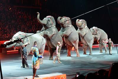 Elephants 03