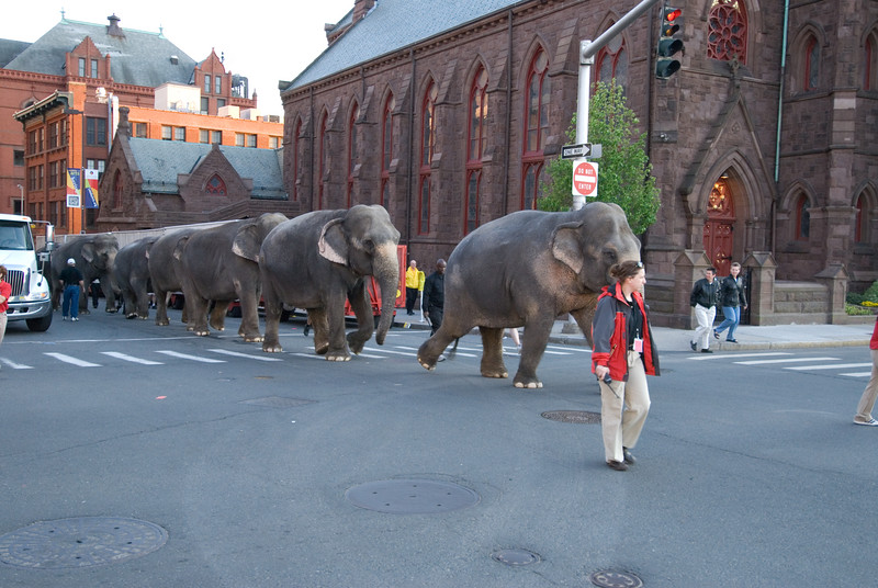 The elephants walk to the train after the last show in Hartford on May 13, 2007.