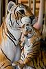 7558 Tiger and Cub