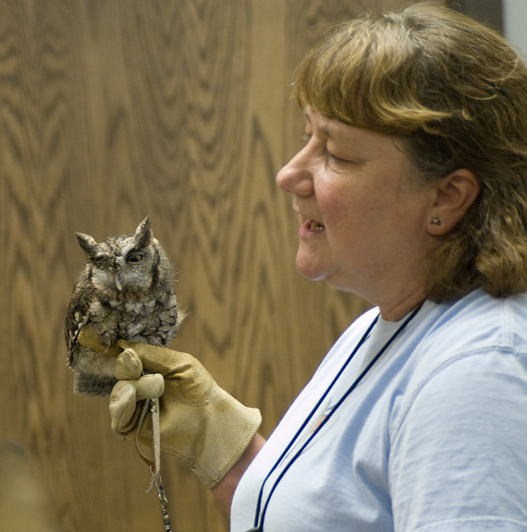 gray Sceech Owl - this poor guy has a pretty severely damaged right eye.