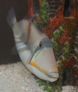 Club Monaco Reef Project