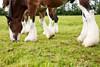 4961 Ten Hooves