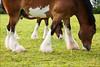 4983 Pasture Pastime