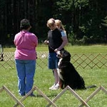 Angela doing obedience with Harley.