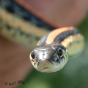 The Eyes Of A Serpent