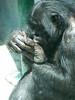 bonobo foot