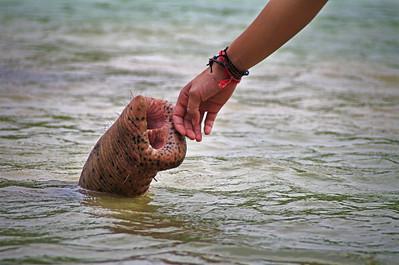 Trunk Love.  India