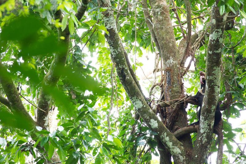 Expert tree climbing