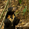 Unique and Exquisite: Each sun bears chest mark!