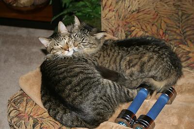 Cori's Cats