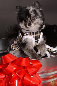 CW Dec 9 2012 005