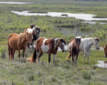 Foal Naptime