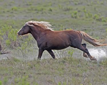 RIptide the Stallion