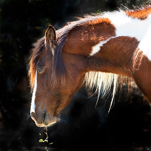 Mare Kissed by the Sun