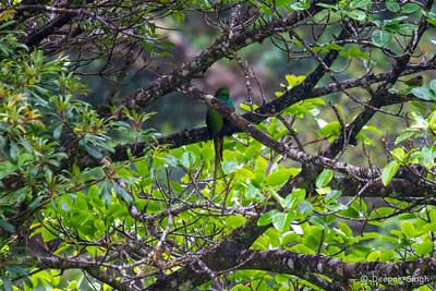 Monteverde 2020: Resplendant QuetAl