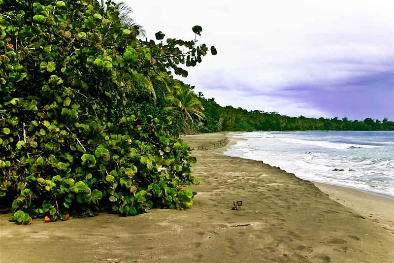 Cahuita Beach (Carribean Coast).
