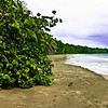 Cahuita Beach (Carribean Coast).