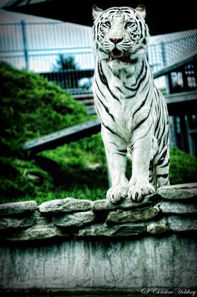 Cougar Mountain Zoo 2012
