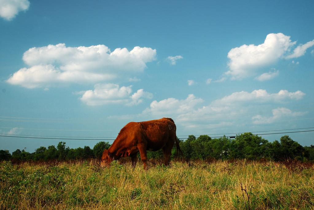 Clarke County (GA) June 2011