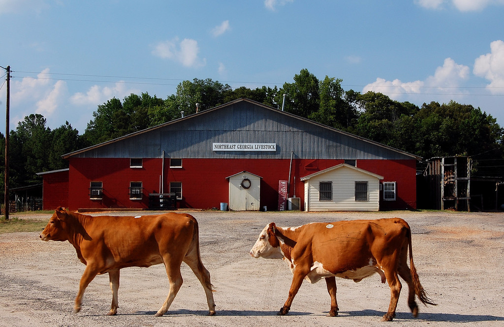 Northeast Georgia Livestock barn, Athens, GA (Clarke County). 2007