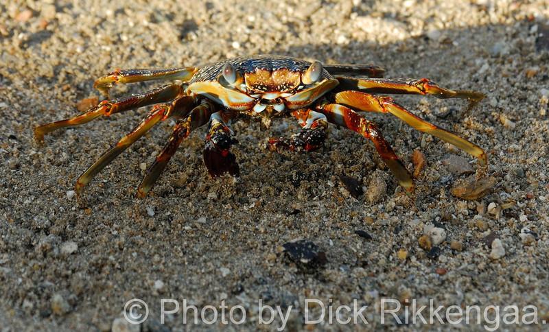 2012-Sept-02-Crab1_006