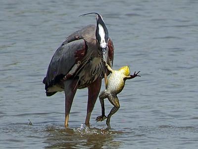 Illinois wildlife photos