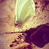 Butterfly Mud Walk