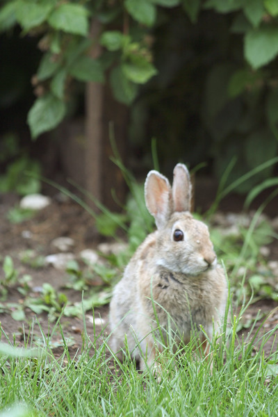 This little critter was wondering through my backyard one afternoon after a heavy rain.  When I took this photo, I was all of six feet away.