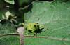 Grasshopper (Sat 6 28 08)