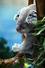 Do not disturb (San Diego Zoo- Wed 2 18 09)