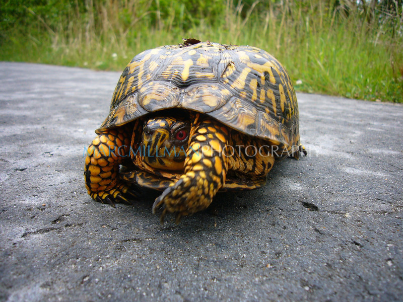 Yertle the Turtle in P o' W2 (Sun 5 31 09)