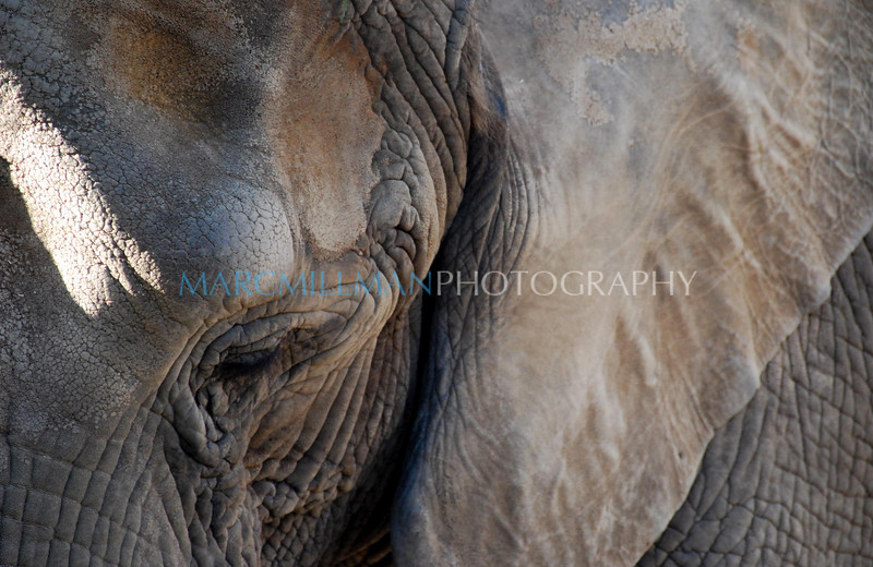 Elephant Eye (San Diego Zoo- Wed 2 18 09)