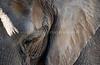 Elephant Eye (San Diego Zoo- Wed 2 18 09)
