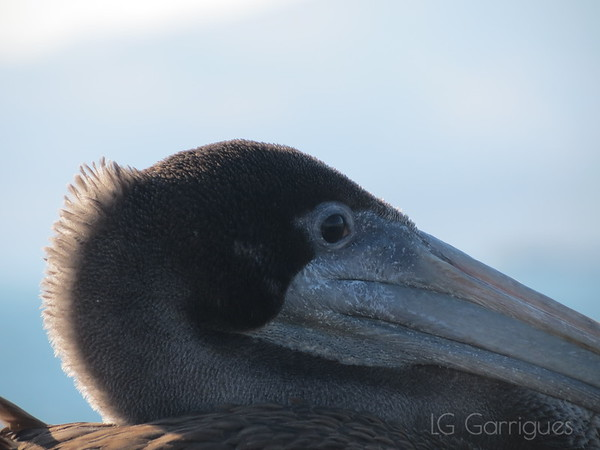 Contemplative Bird