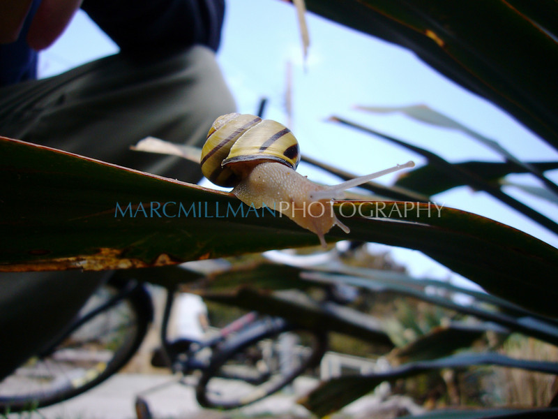 Snail2 (Sat 4 28 07)