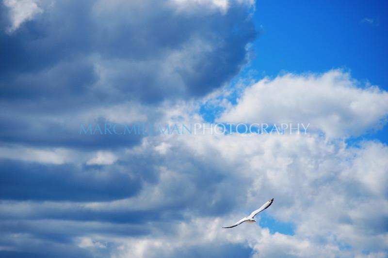 Free Bird (Mon 9 15 08)