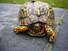 Yertle the Turtle in P o' W3 (Sun 5 31 09)