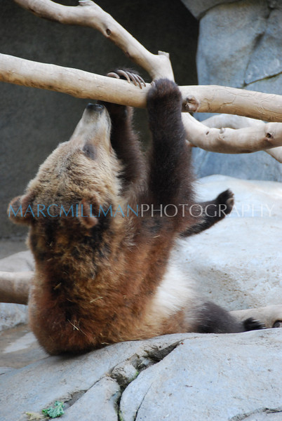 Hangin' Around (San Diego Zoo- Wed 2 18 09)