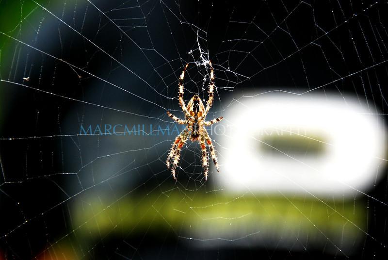 Spider in front of Scott (Sun 9/12/09)