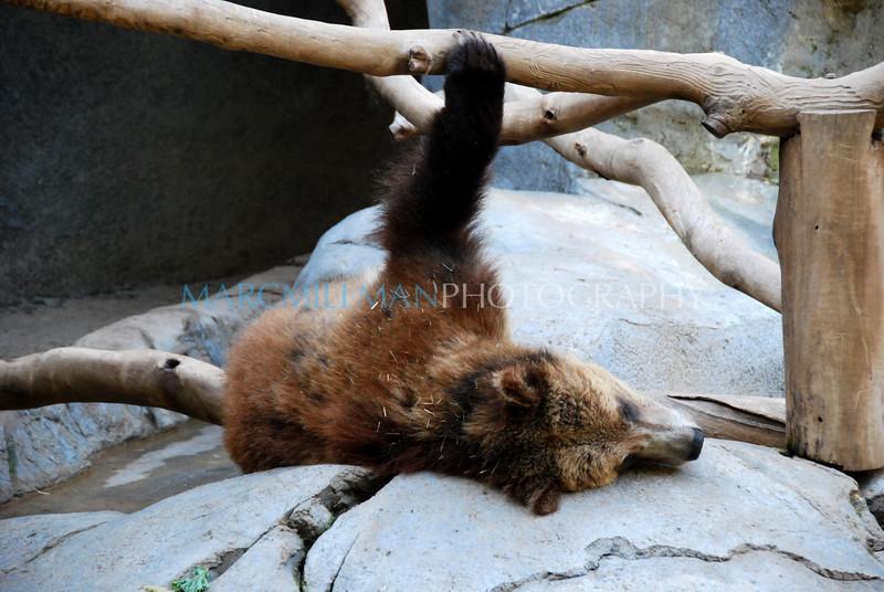 Lazy Day (San Diego Zoo- Wed 2 18 09)