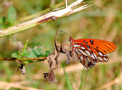 Butterfly Twig